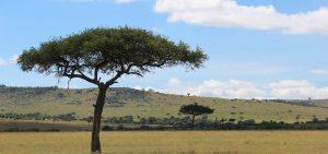 banner-Maasai-Mara-KENYA
