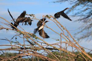 Lake Naivasha KENYA (2)