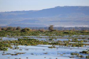 Lake Naivasha KENYA (3)