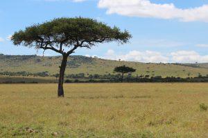 Maasai Mara KENYA (10)