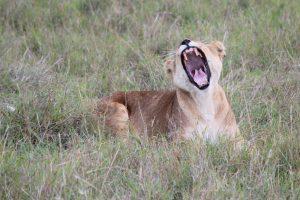 Maasai Mara KENYA (2)