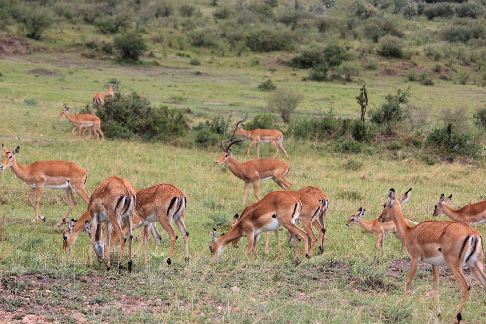 Maasai Mara KENYA (21)
