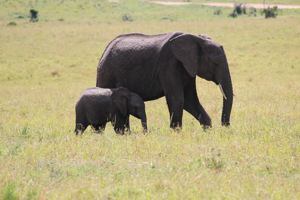 Maasai Mara KENYA (3)