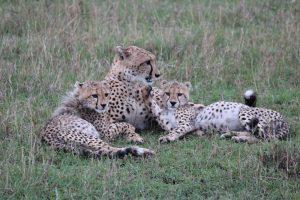 Maasai Mara KENYA (4)