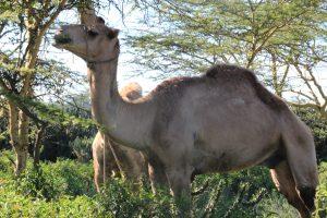 Maasai Mara KENYA (7)