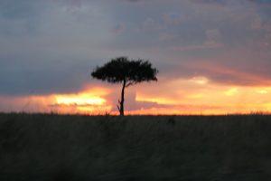 Maasai Mara KENYA (9)